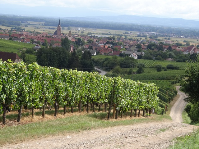 Fietsen tussen de wijnranken